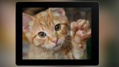 Los mejores juegos de móviles para tu gato