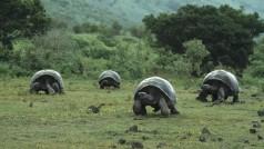 El Gran Hermano de los suricatos: YouTube retransmite el Zoo de Londres en directo