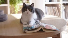 10 cuentas de gatitos que deberías seguir en Tumblr e Instagram
