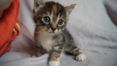 Un pobre gato cojo vuelve a caminar gracias a una impresora 3D: ¡te enternecerás cuando veas al minino!