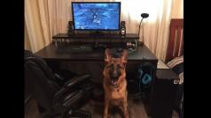 Así es cómo los perros y los gatos reaccionan cuando ven Fallout 4: ¡el último vídeo es alucinante!