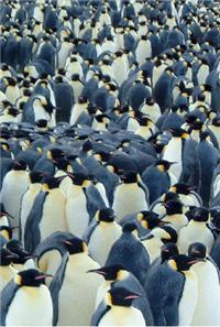 Do not panic the penguins