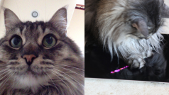 Put your cat in control with the Cat Selfie app