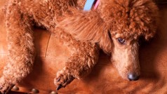 Google researchers discover unfixable 'POODLE' web traffic encryption flaw