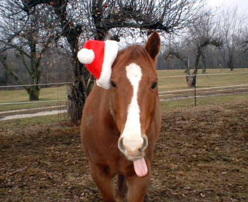 Not a reindeer, but the next closest thing!