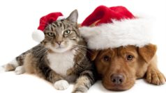 5 best online shopping sites for your pets