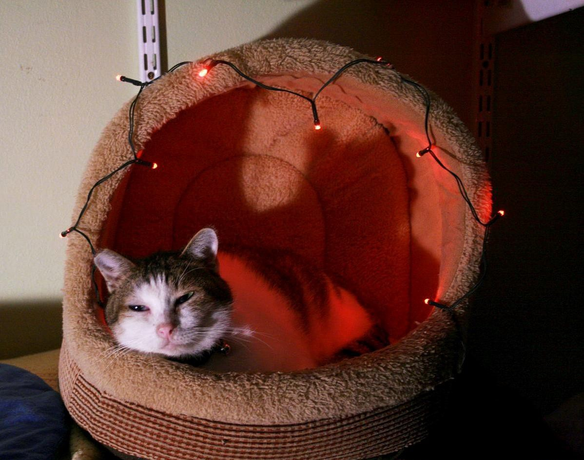 Your cat will feel so happy and at home with a new warm cat bed.