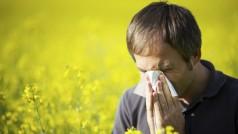 Apps gegen Heuschnupfen: Pollenflug-Vorhersage auf dem Handy