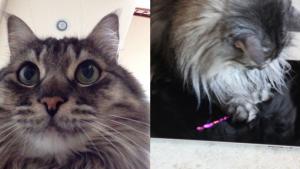 Les applis mobiles qui permettent à votre chat de se photographier