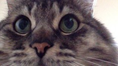 Gry na iPad i Android, w które może zagrać Twój kot!