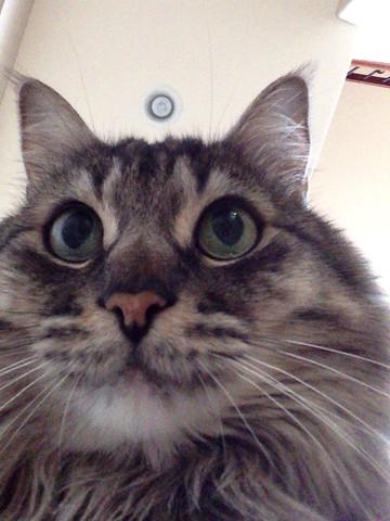 Aplikacje dla kotów - cat selfie na iPad