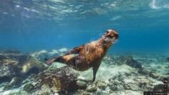 Google Street View – od Wieliczki do Galapagos