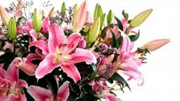 ¿Buscas regalos online para el Día de la Madre? Cuidado con los timos