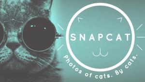 Aplicaciones móviles para que tu gato se haga auto-fotos
