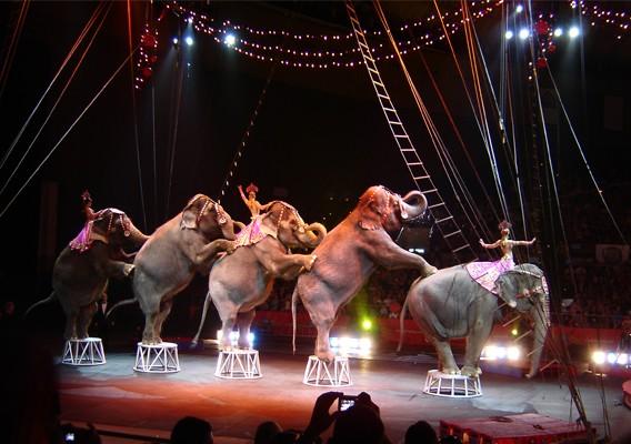 elefante_circo