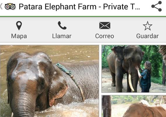 Elefantes TripAdvisor