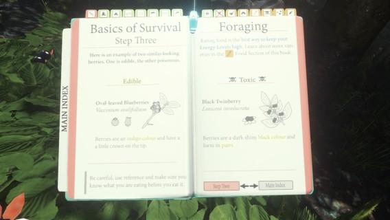 Manual informa tipos de sementes comestíveis