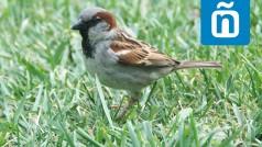 Apps que hablan español: la enciclopedia de aves más completa