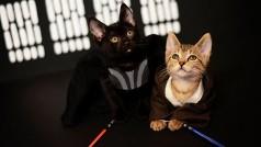 10 gifs de gatos que te harán pasar un día de cine