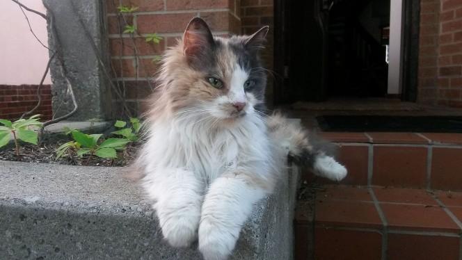 Descubre el Google Maps para los gatos: Cat Street View