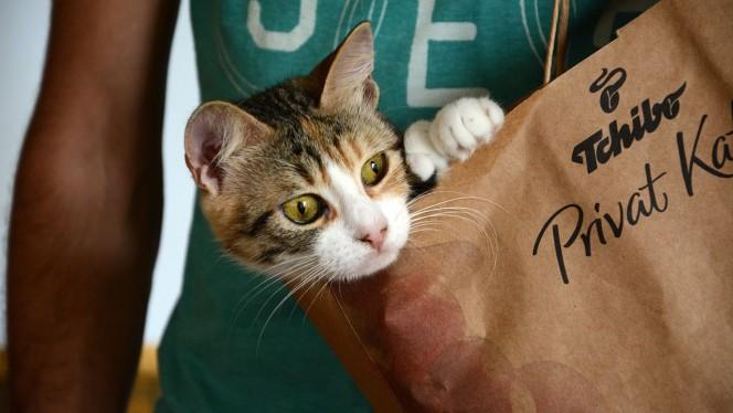 Los gatos colaboran en Twitter con la lucha antiterrorista en Bruselas
