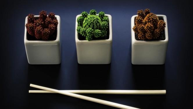cactus_species_bowls_chopsticks_97272_1280x720
