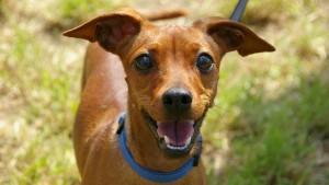 Llega una nueva consola… ¡para tu perro!