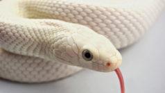 Reto: ¿eres capaz de encontrar a la serpiente escondida entre las hojas?