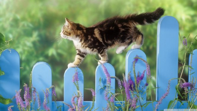 kitten_walking_on_a_fence-wallpaper-1280×720