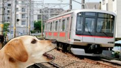 Trenes que ladran para impedir la muerte de los ciervos