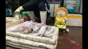 Este gato mercader de Vietnam se ha convertido en la nueva estrella de la red