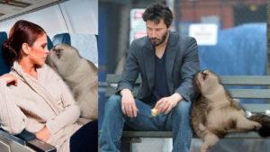 Montajes de Photoshop: Las aventuras del gatazo cansado