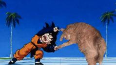 Este gato obeso vive mil aventuras gracias a Photoshop