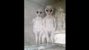 Vídeo viral: ¿estas criaturas encontradas en una obra son alienígenas?