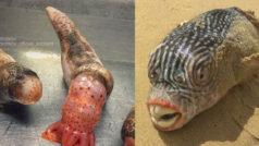 No vas a dormir hoy si ves esta galería de horrendos peces de las fosas abisales