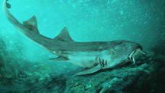 Los científicos bautizan a un tiburón prehistorico con el nombre de un famoso videojuego de marcianitos
