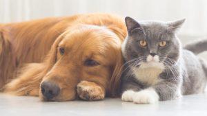 5 trucos para sacar mejores fotos de tus mascotas