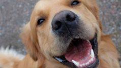 Esta app encuentra perros perdidos gracias a una IA que los identifica por sus huellas nasales