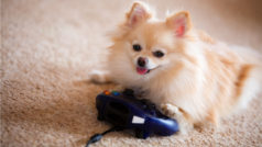 The first video game console for dogs