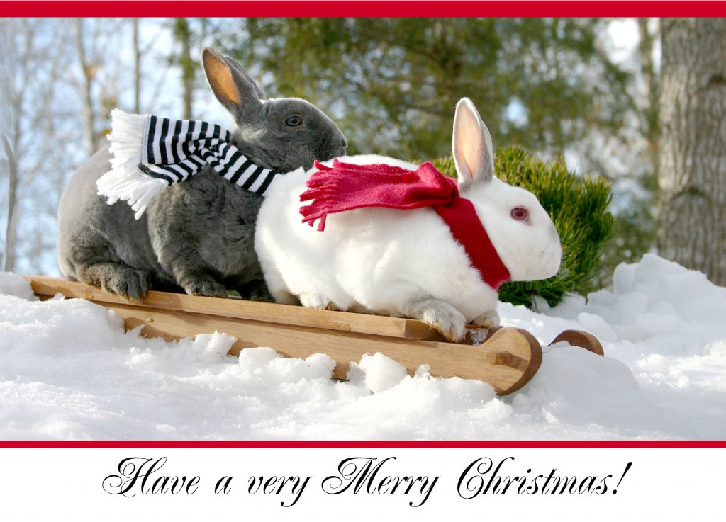 Christmas bunnies!