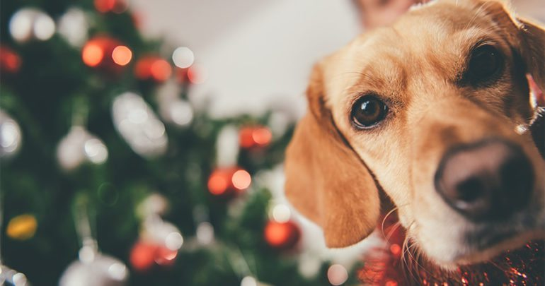 Make this year an awesome Christmas for your pupper!