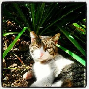 gatti instagram