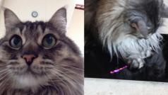 Cat Selfie: tanto va il gatto all'iPhone, che ci lascia l'autoscatto