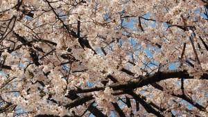3月におすすめのアプリ-卒業編