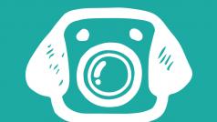 App facilita a vida do usuário na hora de tirar fotos de seus cachorros