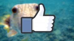 Facebook testa apresentações em slideshow para as fotos de nossas viagens