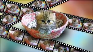 Animierte Katzen-GIFs für Facebook, Twitter, Foren und Avatare erstellen