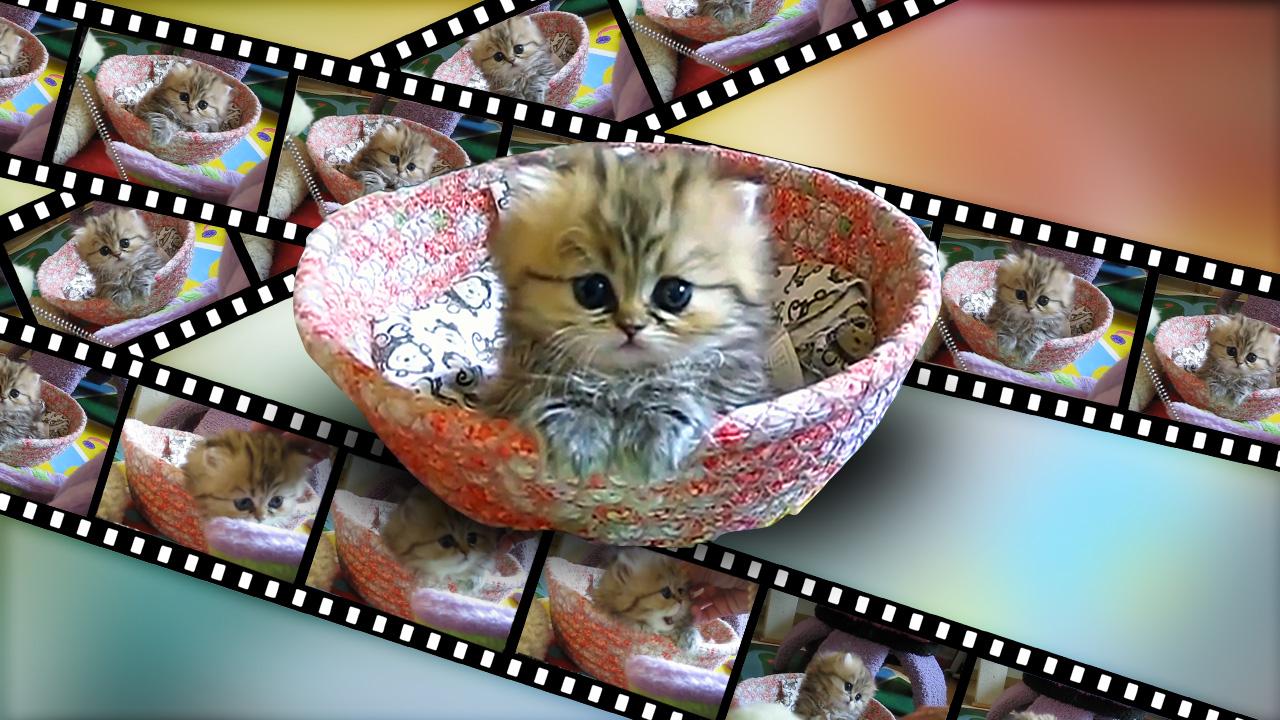 Animierte Katzen-GIFs am Mac erstellen