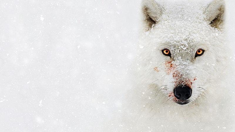 Top 10 National Geographic Dokumentationen, die du auf Disney+ anschauen kannst