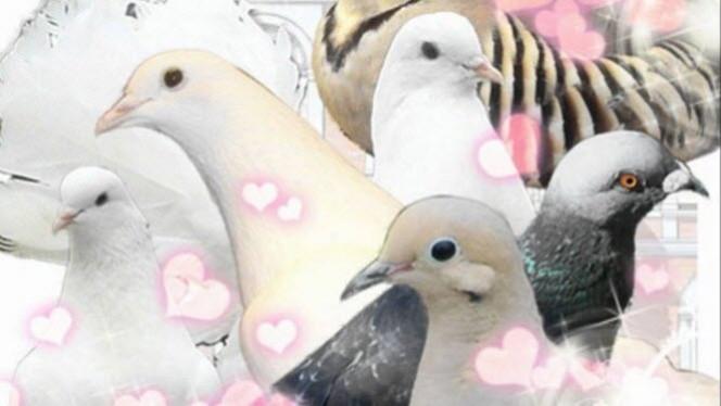 Pigeon-Header-664×374